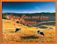 happy-cows-from-cmab-commercial